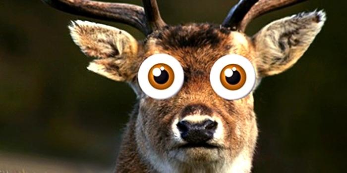 I am the Deer.